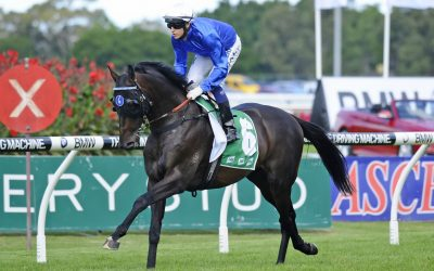 Telemon announces fee for Golden Slipper sire SIDESTEP